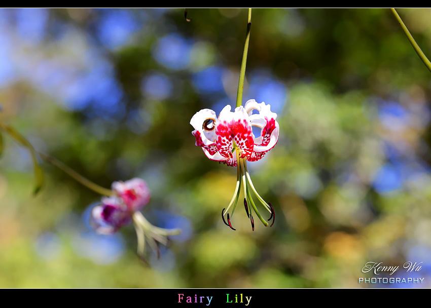 fairyli13.jpg