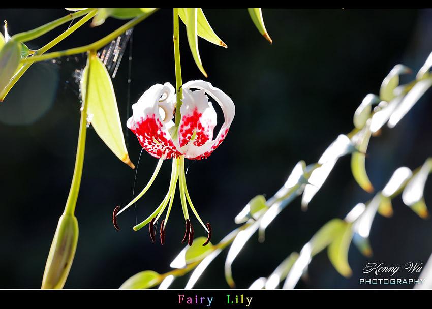 fairyli17.jpg