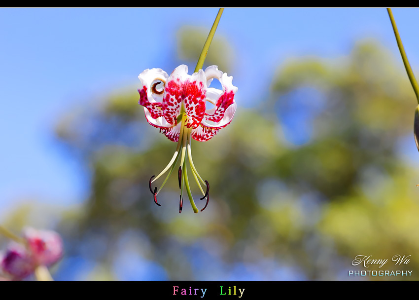 fairyli14.jpg