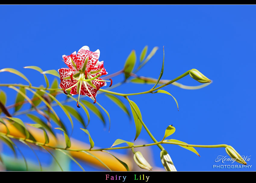 fairyli18.jpg