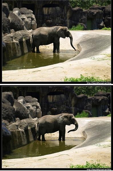 24大象完水.jpg