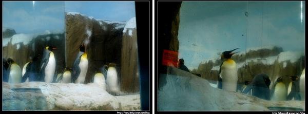 11企鵝.jpg