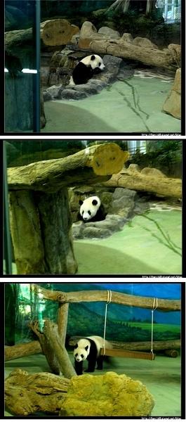 5熊貓.jpg
