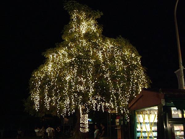 星光大道-路樹