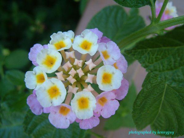 可愛的小花-1