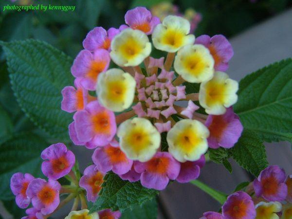 可愛的小花-2