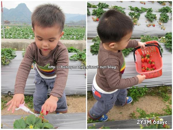 20110306採草莓
