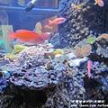 七星柴魚博物館 036.JPG