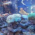 七星柴魚博物館 037.JPG