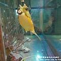 七星柴魚博物館 055.JPG