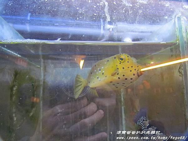 七星柴魚博物館 083.JPG