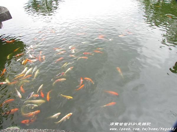立川漁場 028.JPG