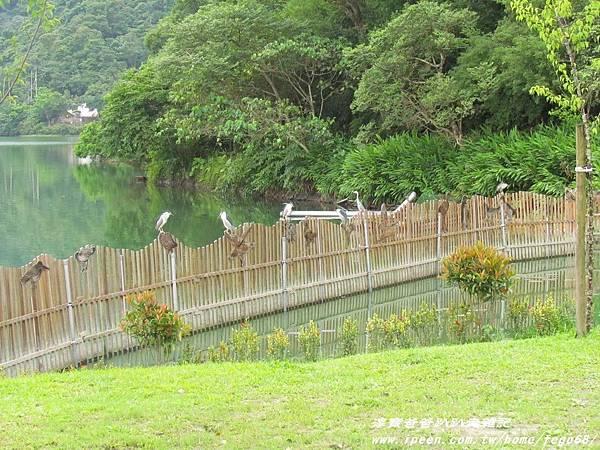 梅花湖 05.JPG