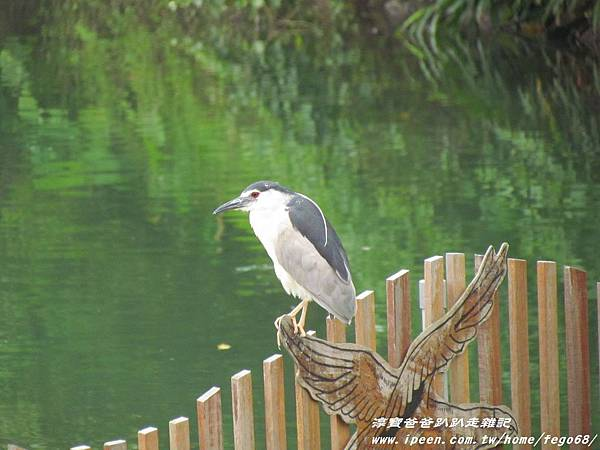 梅花湖 06.JPG