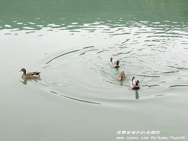 梅花湖 32.JPG