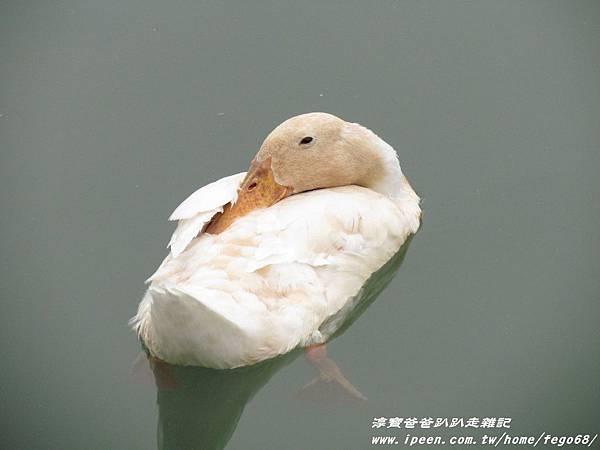 梅花湖 34.JPG