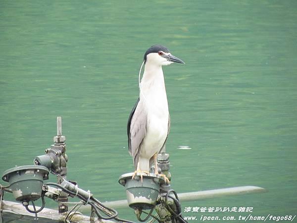 梅花湖 45.JPG