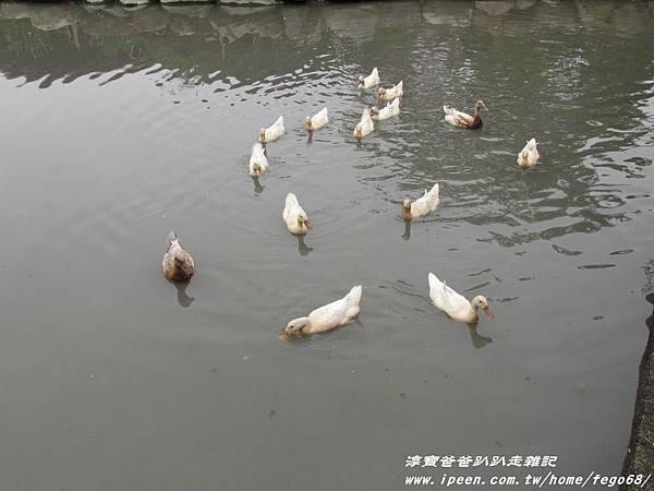 宜農牧羊場 14.JPG
