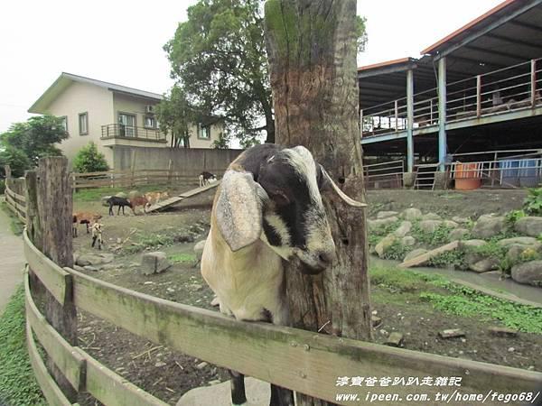 宜農牧羊場 18.JPG