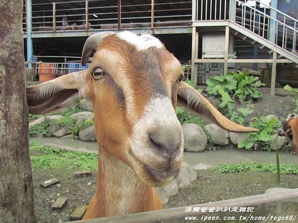 宜農牧羊場 22.JPG