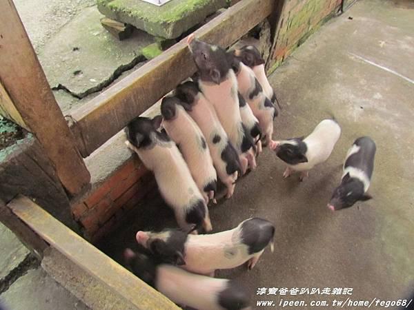 宜農牧羊場 29.JPG
