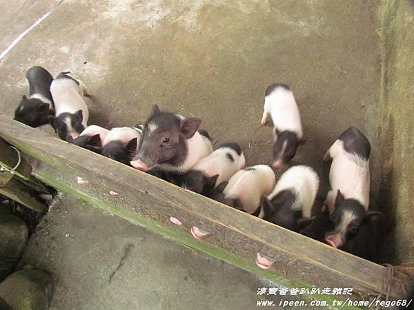 宜農牧羊場 28.JPG