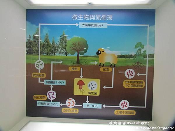 菌寶貝博物館 25.JPG
