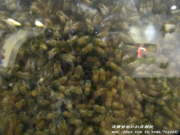蜂采館養蜂人家 33.JPG