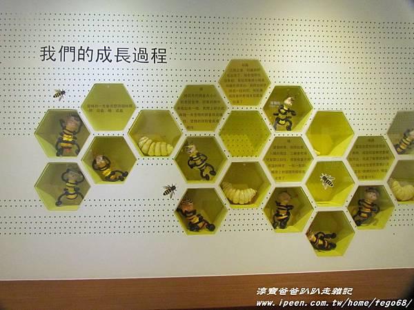蜂采館養蜂人家 36.JPG