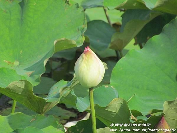 碧山嚴 白石湖吊橋30.JPG