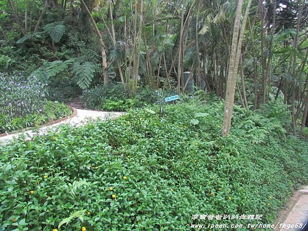 森林鳥花園46.JPG