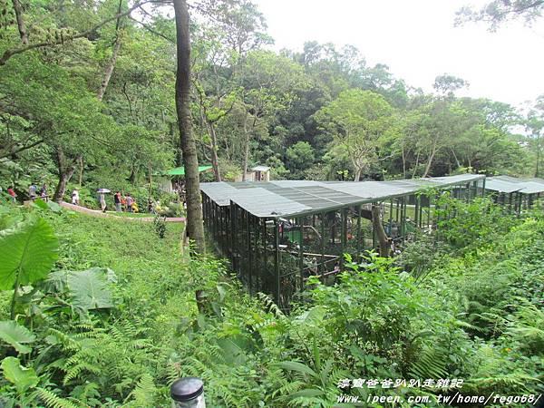 森林鳥花園47.JPG