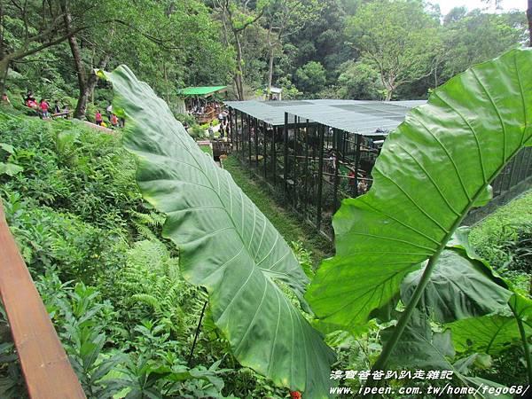 森林鳥花園49.JPG