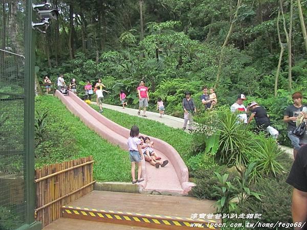 森林鳥花園51.JPG