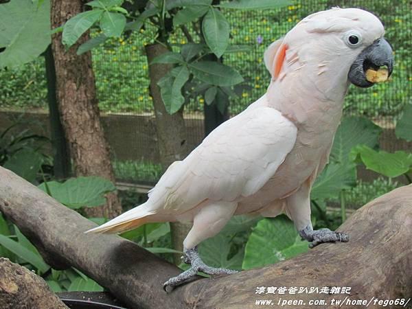 森林鳥花園53.JPG