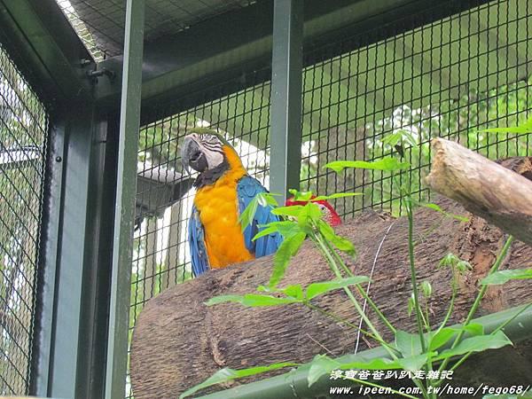 森林鳥花園59.JPG