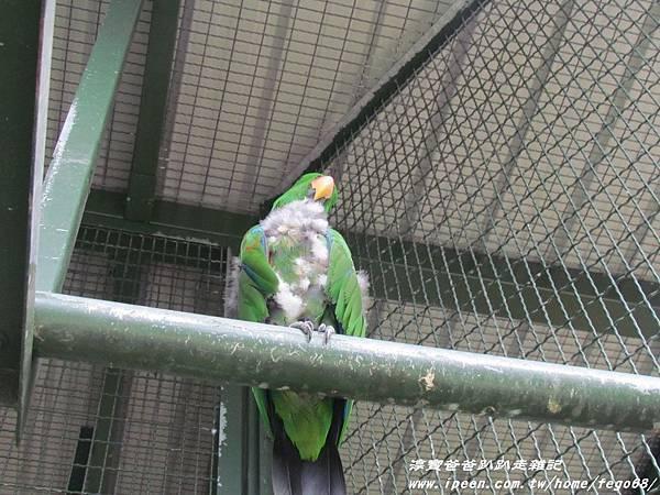 森林鳥花園68.JPG