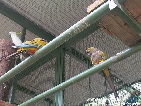 森林鳥花園67.JPG