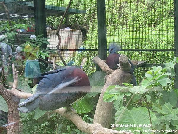 森林鳥花園75.JPG