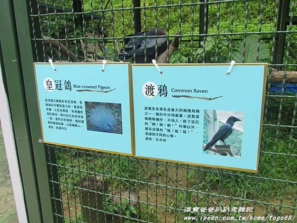 森林鳥花園76.JPG