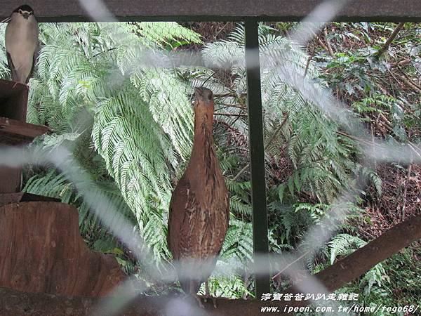 森林鳥花園82.JPG