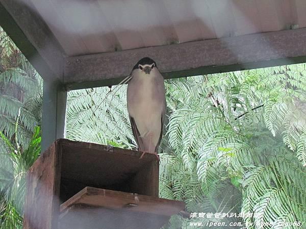 森林鳥花園83.JPG