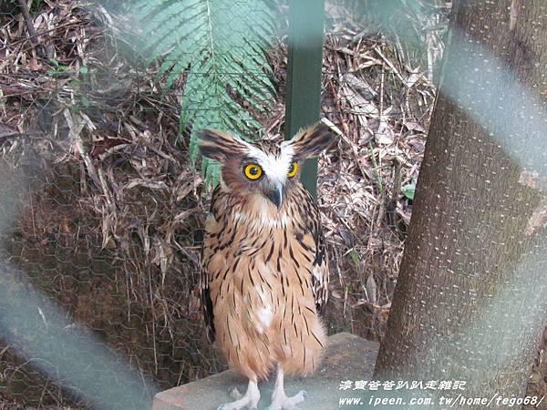 森林鳥花園85.JPG