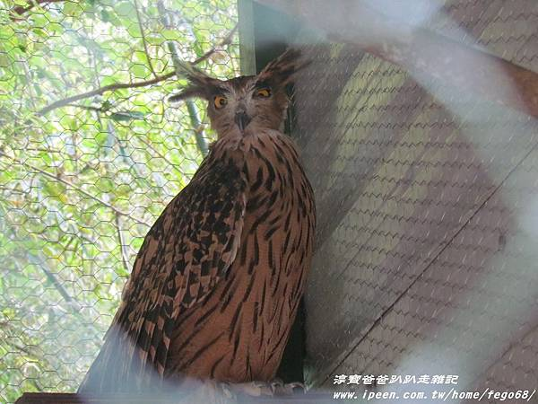 森林鳥花園86.JPG