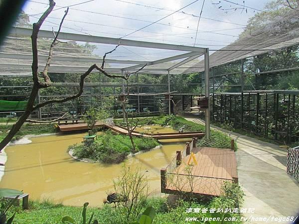 森林鳥花園87.JPG
