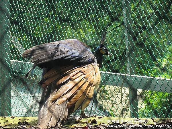 森林鳥花園89.JPG