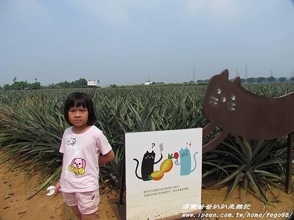 旺萊山鳳梨酥37.JPG