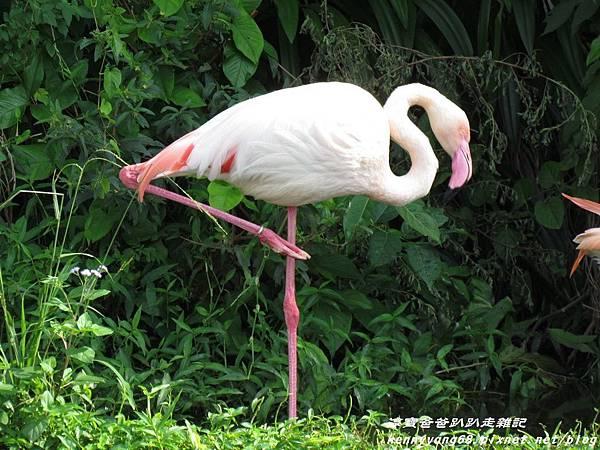 台北動物園005.JPG
