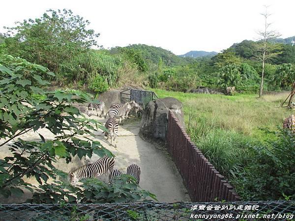 台北動物園025.JPG