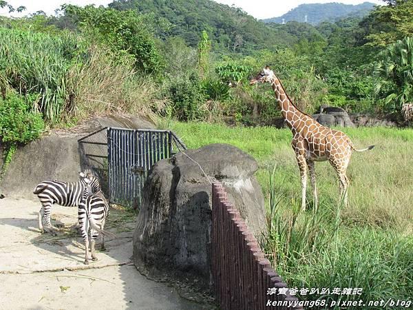 台北動物園027.JPG